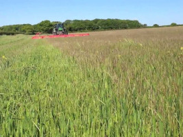 CTM Weed Surfer - Topping blackgrass