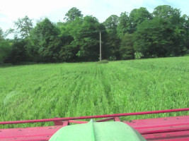 CTM Weed Surfer topping wild oats on organic farm
